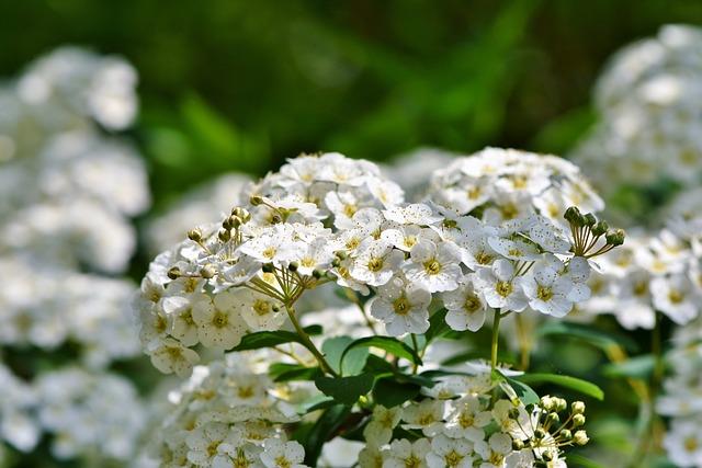 Flower, White Flowers, Blossom, Bloom, White Flower