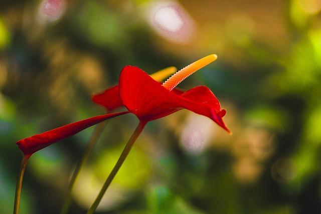 Nature, Flowers, Cart, Plants, Garden, White, Violet