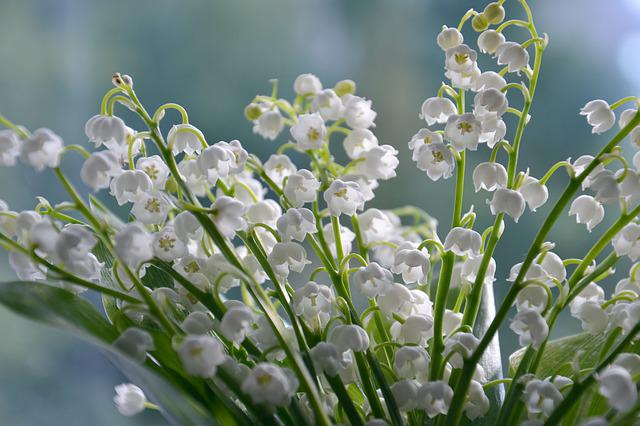 Flowers, Nature, White, Lilies Of The Valley, Summer