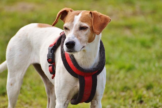 Dog, White, Animal, Good Aiderbichl, Sanctuary