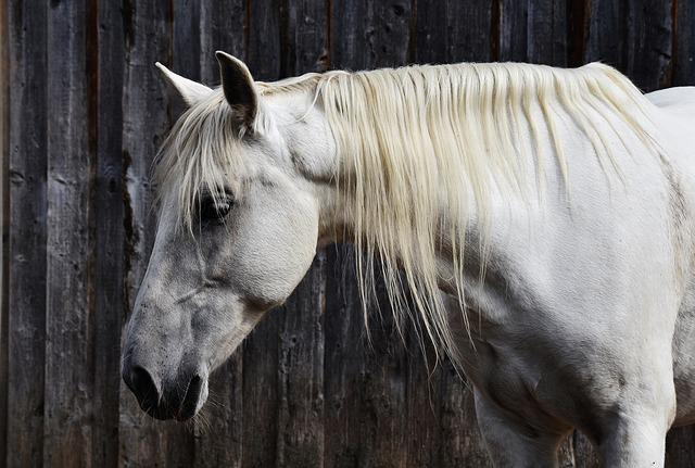 Horse, Mold, Reiterhof, Animal, White Horse, Nature