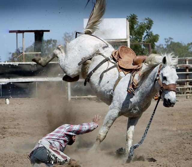 Rodeo, Horse, White Horse, Action Shot, Cowboy