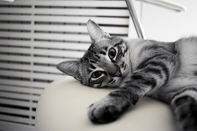 Cat, Pet, Rest, White, Animal, Feline, Kitten, Look
