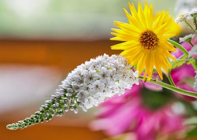 Loosestrife, Marigold, Flower, White, Bloom, Plant