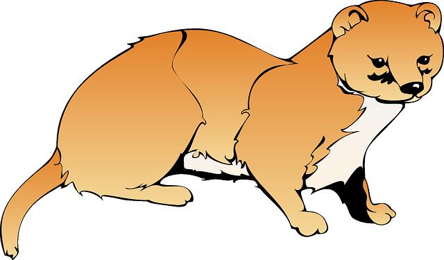Weasel, Brown, White, Orange, Animal, Tail, Mammal