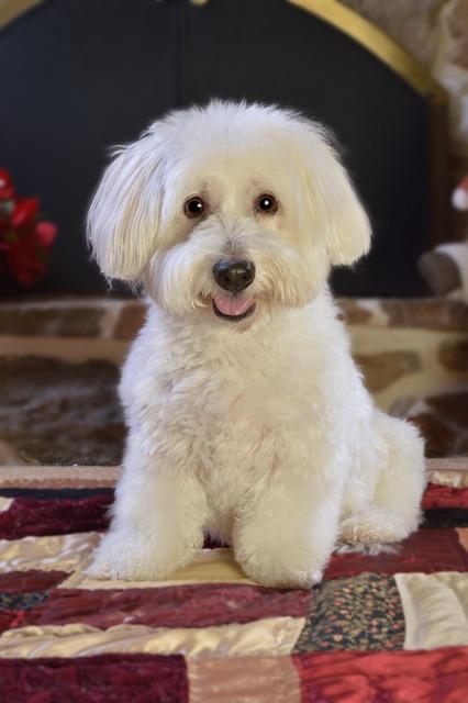 Dog, White, Pet, Cute, Animal, Canine, Domestic