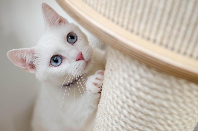 White, Cat, She-cat, Beautiful, Home, Albino, Miracle