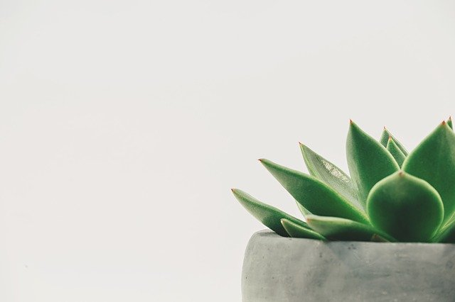 Plant, Succulent, Potted, White Space, White Background
