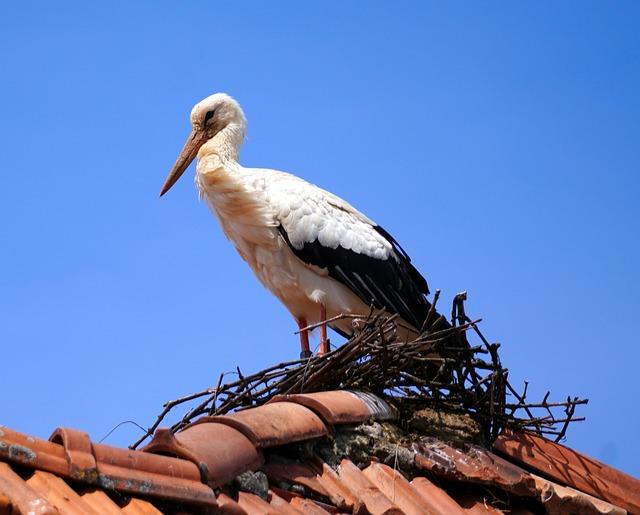 Stork, Nest, Roof, Bird, White Stork, Spring, Nature