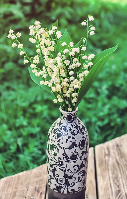 Lily Of The Valley, Flower, Pot, Sunlight, Green, White