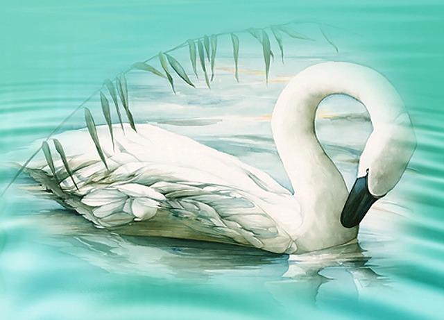 Swan, Lake, Mood, White Swan, Water, Animal, Pond