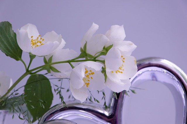 Jasmin, Flower, Blossom, Bloom, Vase, Deco, White