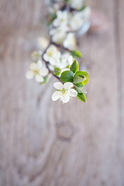 Flowers, White, Flowering Twig, White Flowers