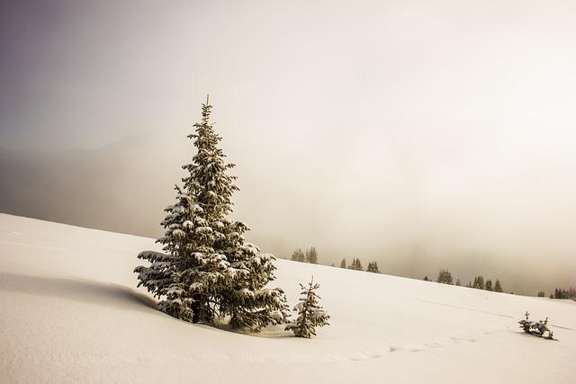 Cold, Snow, Trees, White, Winter