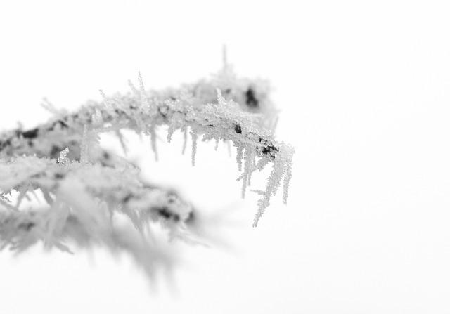 Macro, Nature, Winter, Snow, White