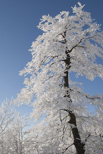 Tree, Winter, Snow, Nature, White, Snowy