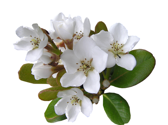 White, Flower, With, Ant Cut, Out