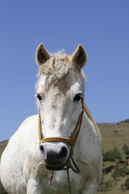 Whitehorse, Animal, Watch