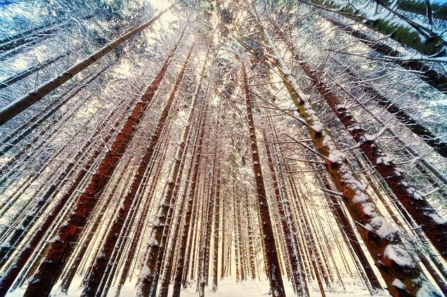 Trees, Forest, Wide Angle, Nature, Winter, Snow, Ice