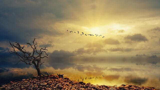 Sea, Wide, Bank, Tree, Sunlight, Sunset, Clouds, Nature