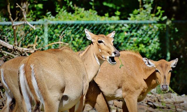 Roe Deer, Doe, Wild, Red Deer, Animal, Damm Wild