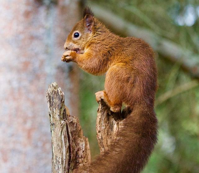 Squirrel, Wildlife, Nature, Wild, Mammal, Animal