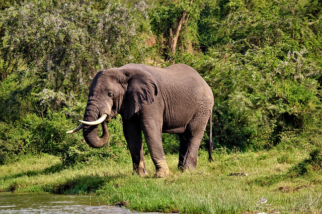 Nature, Animal World, Mammal, Grass, Wild, Elephant