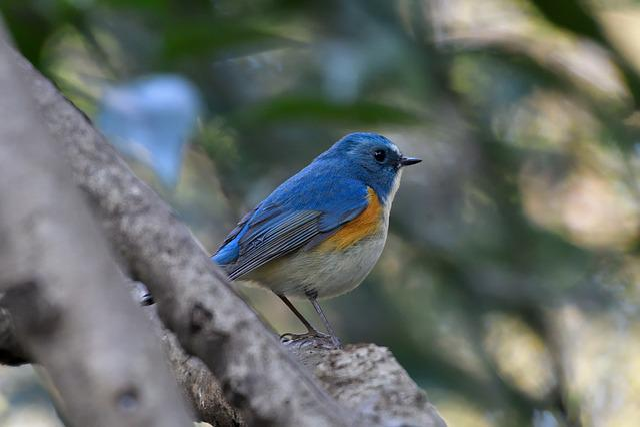 Natural, Bird, Wild Animals, Animal, Outdoors