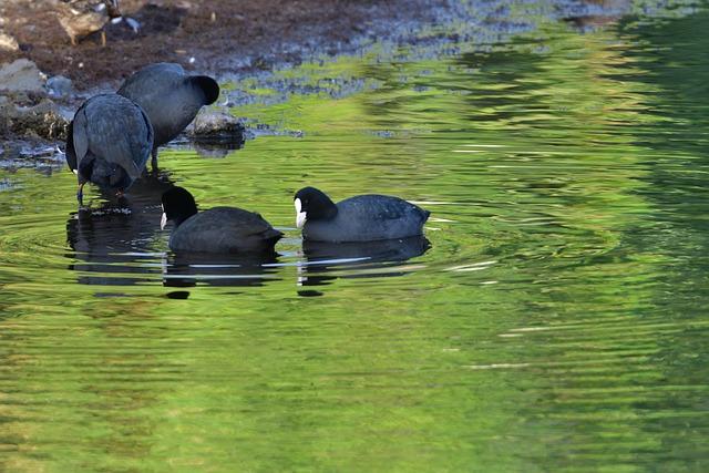 Waters, Natural, Wild Animals, Grass, Animal, Bird