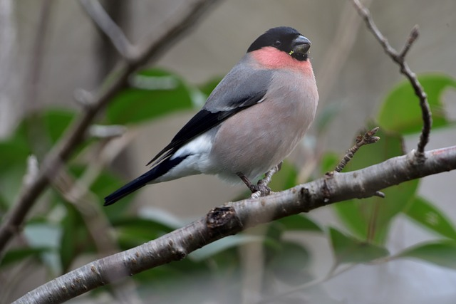 Bird, Wild Animals, Outdoors, Natural, Free