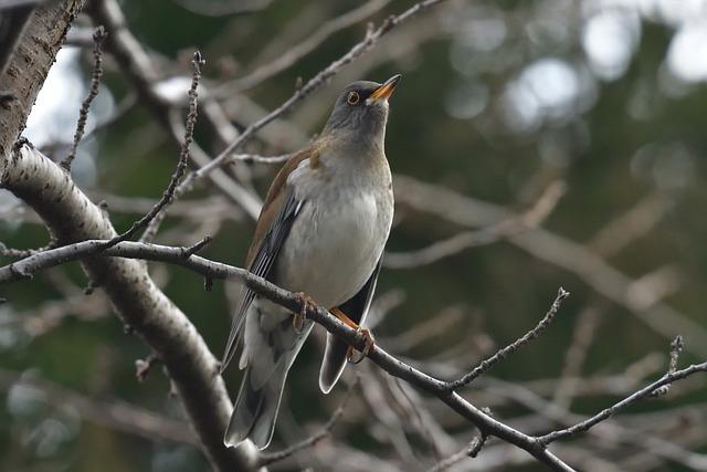 Natural, Bird, Wild Animals, Outdoors, Wood