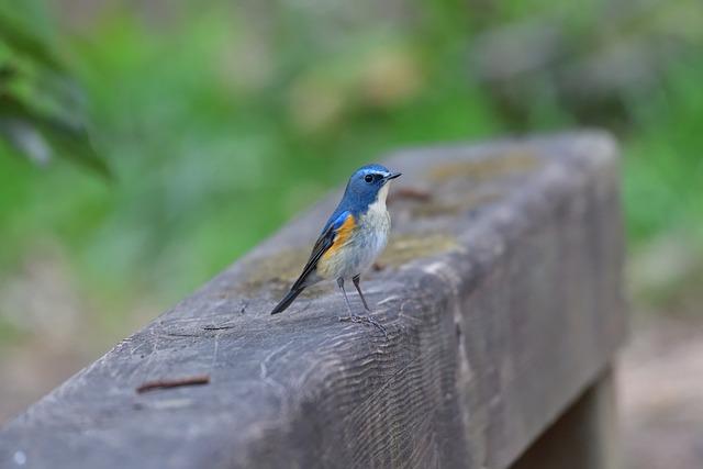 Bird, Outdoors, Wild Animals, Natural