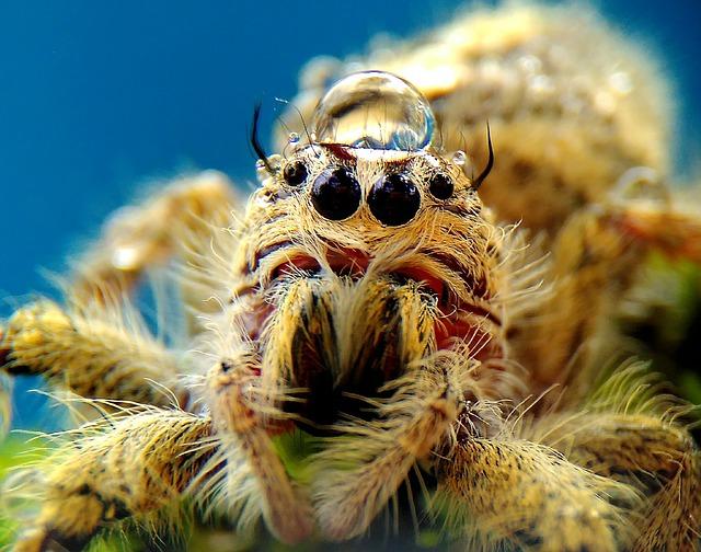 Spider, Animals, Macros, Wild, Nature
