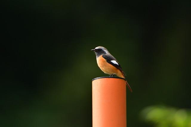 Natural, Outdoors, Wild Animals, Bird, A Key