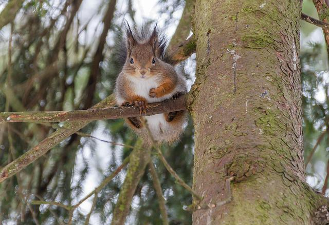 Tree, Nature, Wild Animals, Squirrel, Bark, Six