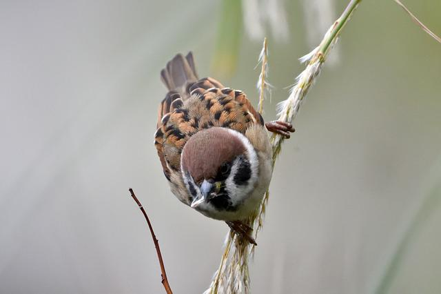 Bird, Wild Animals, Natural, Animal, Sparrow