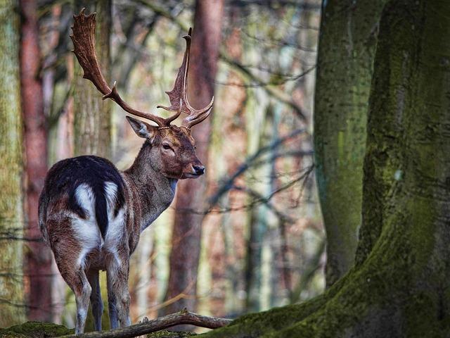 Zoo, Cervidae, Nature, Mammal, Ungulates, Wild Animals