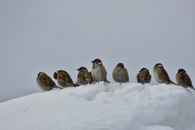 Animal, Bird, Wild Birds, Little Bird, Sparrow