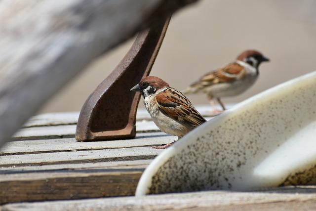 Animal, Wood, Bird, Wild Birds, Sparrow, Wild Animal