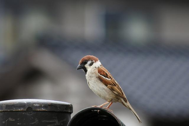 Animal, Little Bird, Sparrow, Wild Birds, Wild Animal