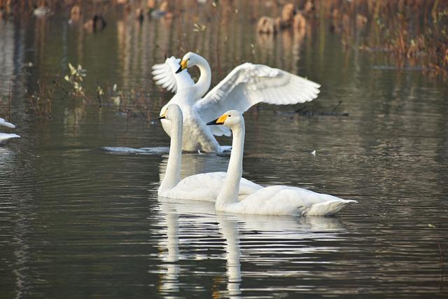 Animal, Lake, Waterside, Morning, Bird, Wild Birds