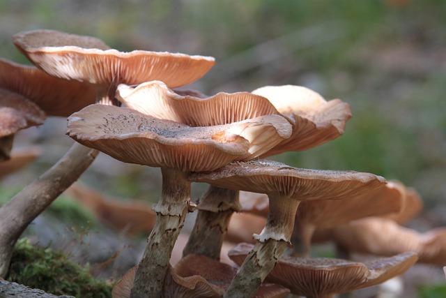 Mushrooms, Autumn, Nature, Wild, Brown, Wet, Group