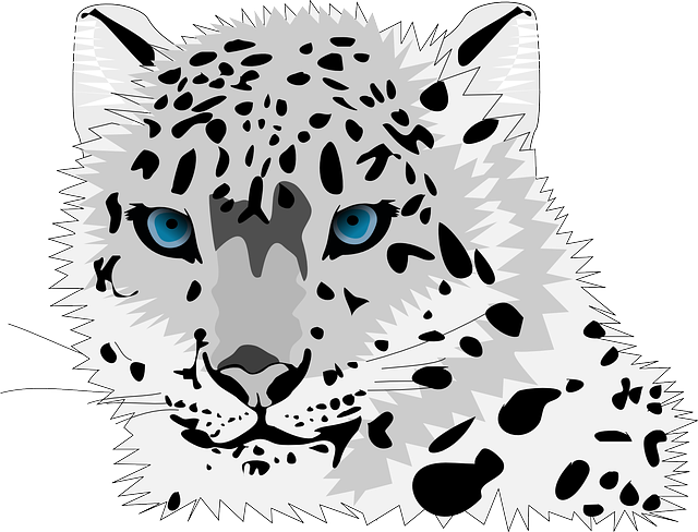 Animal, Cat, Leopard, Snow Leopard, Wild Cat