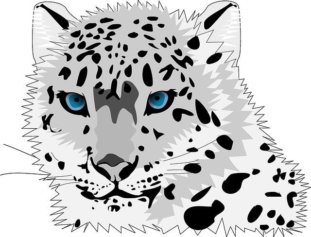 Animal, Cat, Leopard, Snow Leopard, Wild Cat