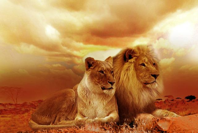 Lions, Couple, Safari, Pair, Wild Animals, Wild Cats