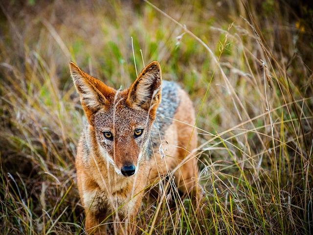 Prairie Dog, Dog, Wild Dog, Wild, Wild Animal, Steppe