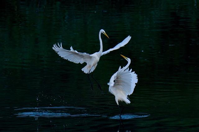 Common Heron, Birds, Egret, Wings, Wild, Heron, Animal