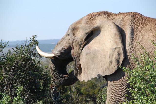 South Africa, Wild, Nature, Wildlife, Animals, Elephant