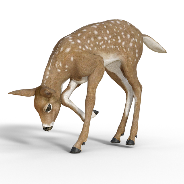 Roe Deer, Bambi, Kitz, Young Deer, Forest, Wild, Fawn