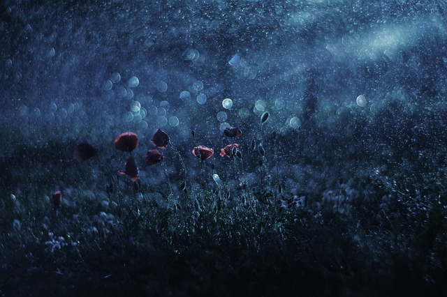 Summer, Meadow, Night, Reflected Rays, Wild Flowers